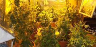 Σύλληψη δυο ημεδαπών για καλλιέργεια δενδρυλλίων κάνναβης και κατοχή ναρκωτικών