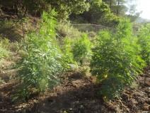 Σύλληψη για ναρκωτικά στην Πάρο