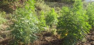 Συλλήψεις για ναρκωτικά στην Πάρο