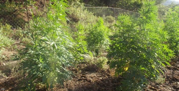 Εξαρθρώθηκε πολυμελές κύκλωμα ναρκωτικών