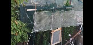 Σύλληψη 24χρονου για καλλιέργεια φυτών κάνναβης και κατοχή ναρκωτικών