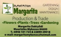 Margarita Plantation