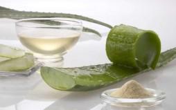 Αλόη: θεραπευτικές, θρεπτικές και καλλυντικές ιδιότητες