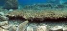 (ΦΩΤΟ) Δήλος: Σημαντικά ευρήματα αποκάλυψαν οι αρχαιολογικές έρευνες