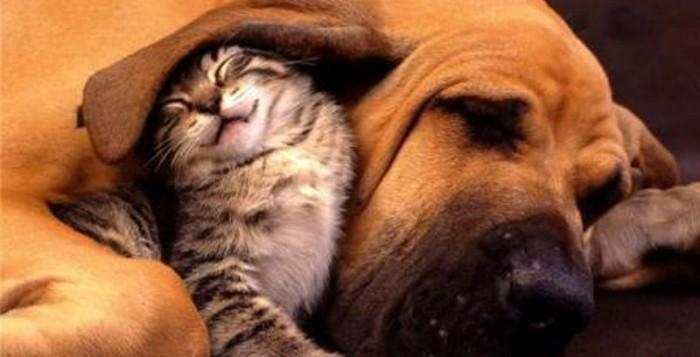 Δήμος Μυκόνου: Πρόσκληση ενδιαφέροντος κτηνιάτρων για στείρωση στα αδέσποτα
