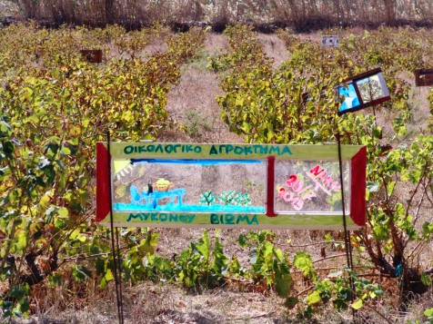 Tο Mυκονιάτικο Kρασί στο Φεστιβάλ