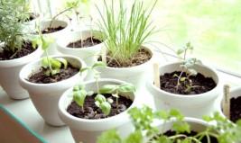 Καλλιεργείστε τρόφιμα από τα υπολείμματα της κουζίνας σας