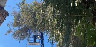 Ο Δήμος Μυκόνου ξεκίνησε τις εργασίες των αναγκαίων κλαδεμάτων σε κοινόχρηστους χώρους