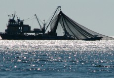 Ξεκίνησε η εξέταση των αιτήσεων θεραπείας των αλιέων βιτζότρατος από την Περιφέρεια