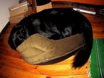 Σκύλοι που νομίζουν ότι είναι ακόμα κουταβάκια!
