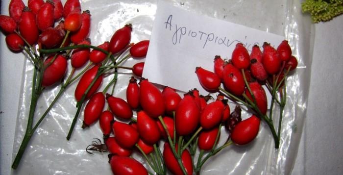 Ημερίδα για βιολογικές καλλιέργειες και αρωματικά φυτά