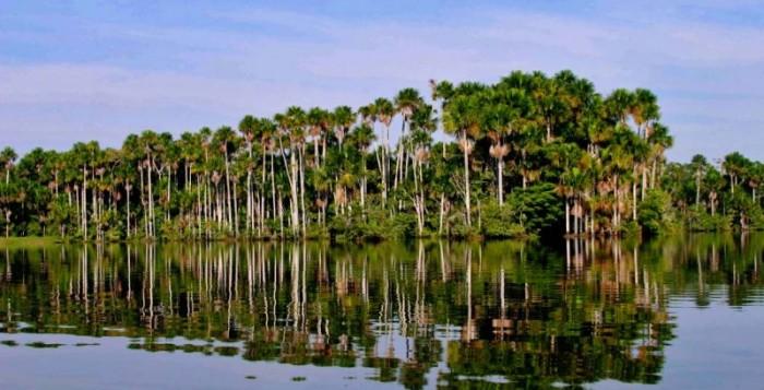 Επιπτώσεις στον Αμαζόνιο λόγω της υπερθέρμανσης