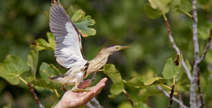 Την Κυριακή ραντεβού στο φράγμα της Άνω Μεράς για την Ευρωπαϊκή Γιορτή Πουλιών