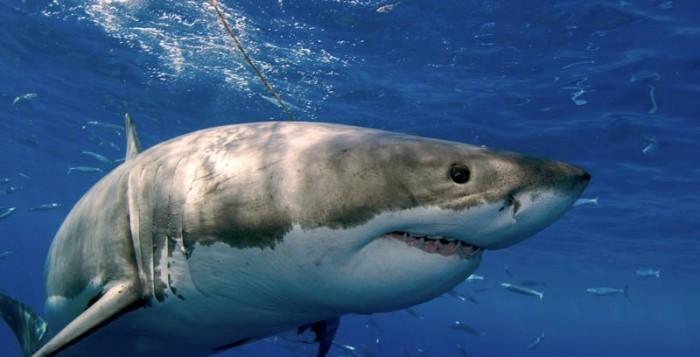 Οι καρχαρίες χρησιμοποιούν τον ήλιο για να κυνηγούν