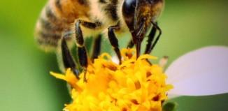 Κίνδυνος θάνατος τα φυτοφάρμακα για τις μέλισσες