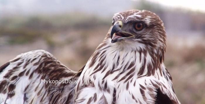 Αναστολή λειτουργίας του Ελληνικού Κέντρου Περίθαλψης Άγριων Ζώων