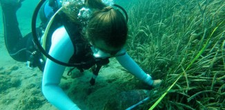 Πίννα, άλλο ένα θαλάσσιο είδος κοντά στον αφανισμό