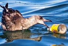 Πλαστικά σκουπίδια σκεπάζουν τη Μεσόγειο Θάλασσα – Έρευνα