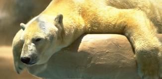 Ποια ζώα θα επηρεάσει περισσότερο η κλιματική αλλαγή