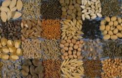 Σε κρίσιμο σημείο οι διαπραγματεύσεις για τη νέα Ευρωπαϊκή Νομοθεσία για την εμπορία σπόρων