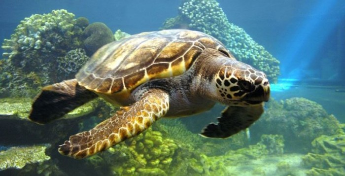 Οι θαλάσσιες χελώνες μπορεί σύντομα να μην περνούν χρόνο στην ξηρά