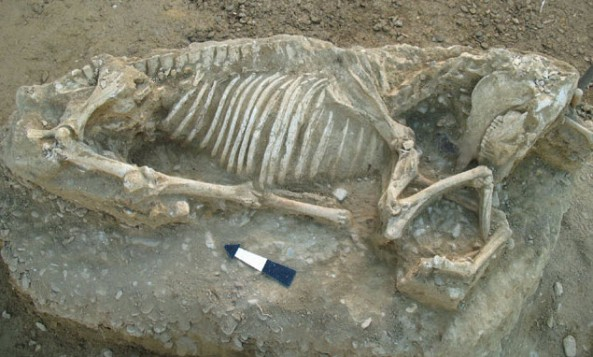 Αιγαίο - Πολιτισμός: Στο φως αρχαϊκή νεκρόπολη του 7ου αιώνα π.Χ. στη Χίο