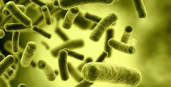 Παγκόσμιος συναγερμός! Τι είναι ο ιός Ζίκα, πώς μεταδίδεται, ποιά τα συμπτώματα