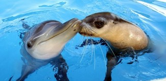 Τα δελφίνια και οι φώκιες έχουν καρδιακές αρρυθμίες