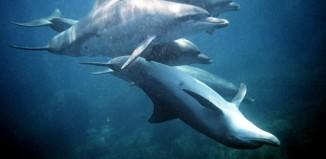 Νεκρά δελφίνια πέντε χρόνια μετά την πετρελαιοκηλίδα του Κόλπου του Μεξικό