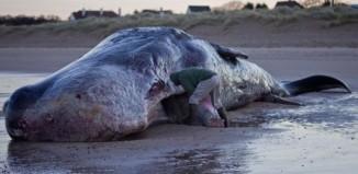 Ξεβράστηκαν νεκρές 100 φάλαινες σε ακτή της Νέας Ζηλανδίας