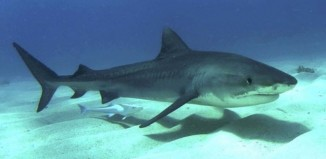 Video: καρχαρίες κολυμπούν μέσα σε κρατήρα ενεργού ηφαιστείου