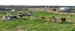 Μία κτηνοτροφική μονάδα και γεωργικές εγκαταστάσεις με σοβαρές ζημιές στην Ρόδο