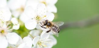 Τα συμπεράσματα έρευνας για την μελισσοκομία στις Κυκλάδες