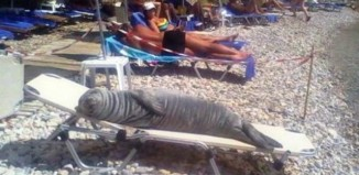 Φώκια σε ελληνικό νησί κάνει ηλιοθεραπεία μαζί με τους λουόμενους