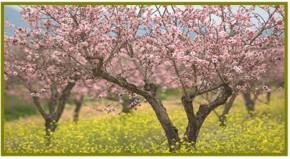 Μύκονος: Σεμινάριο Φυσικής Καλλιέργειας διοργανώνει η ΠΝΑΙ