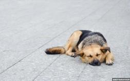 Διαγωνισμός για την παροχή κτηνιατρικών υπηρεσιών από τον Δήμο Μυκόνου