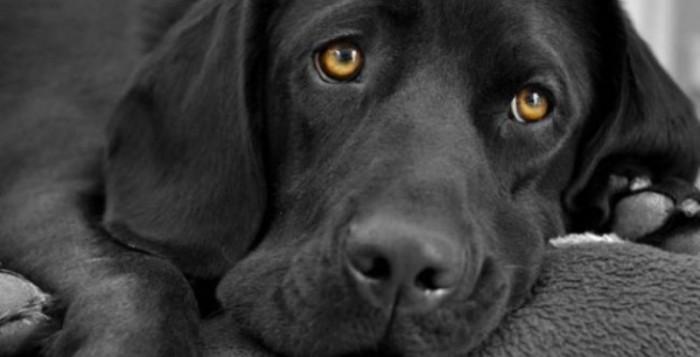 Τα σκυλιά έχουν βραχυπρόθεσμη μνήμη διάρκειας δύο λεπτών