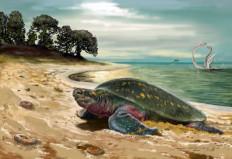 Η αρχαιότερη θαλάσσια χελώνα του κόσμου βρέθηκε στην Κολομβία