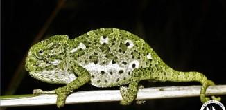Άγνοια για τη Φύση: ο Μεγαλύτερος Κίνδυνος για την Επιβίωση της Άγριας Ζωής