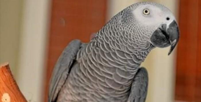 ΗΠΑ: Παπαγάλος επέστρεψε σπίτι μετά από τέσσερρα χρόνια μιλώντας… ισπανικά