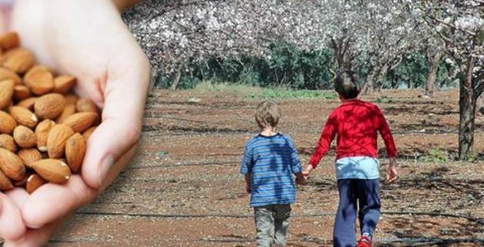 Η αμυγδαλιά «ανθίζει» κέρδη για τους αγρότες