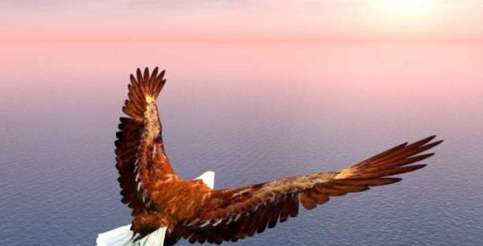 Ο Αετός και οι Καταιγίδες