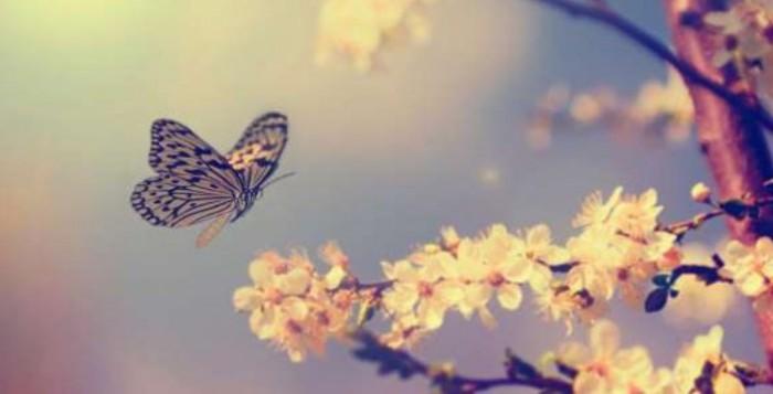 Η Πεταλούδα και ο Μεταξοσκώληκας