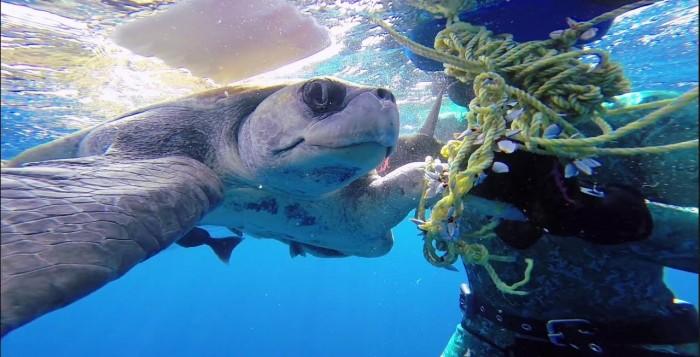 Δύτης σώζει θαλάσσια χελώνα κι αυτή τον ευχαριστεί… (βίντεο)