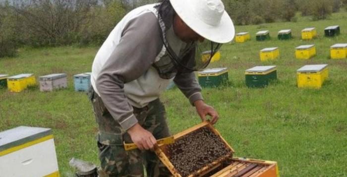 Πρόγραμμα Στήριξης των Μικρών Νησιών του Αιγαίου Πελάγους στον τομέα της Μελισσοκομίας για το έτος 2020