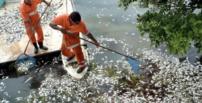 Μυστήριο με χιλιάδες νεκρά ψάρια στον Ολυμπιακό Όρμο του Ρίο ντε Τζανέιρο