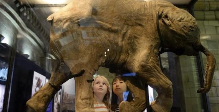 Επιστήμονες ελπίζουν να κλωνοποιήσουν μαμούθ