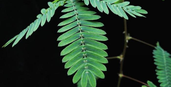 Μπορούν να νιώσουν πόνο τα φυτά; Ένα απίστευτο βίντεο