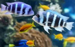 Τα ψάρια διασκεδάζουν παίζοντας, δείχνει νέα μελέτη