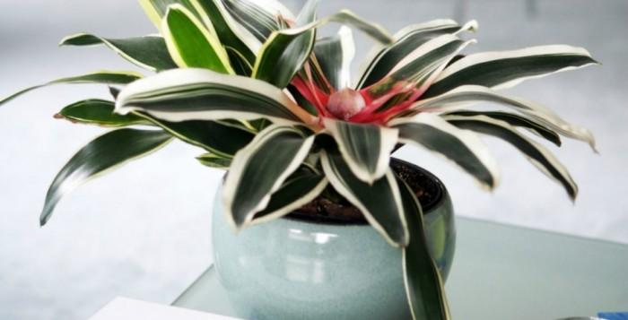Κι όμως υπάρχουν φυτά που καθαρίζουν την ατμόσφαιρα στο σπίτι σας - Δείτε ποια είναι